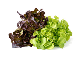 green and red lettuce isolated on white background