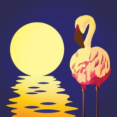 flamingo in the sun