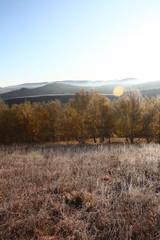 tree, mountain, sunrise