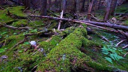Glacier National Park Woodland Landscape