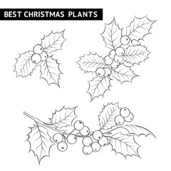 Christmas mistletoe branch drawing.