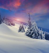 Arbres couverts de givre et de la neige dans les montagnes