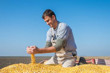 farmer holding ripe corns