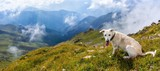 White dog in the mountains