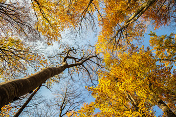 Autumn and forest with blue sky