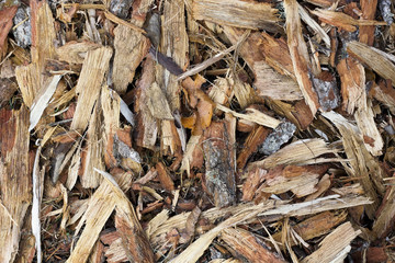 forest pine bark