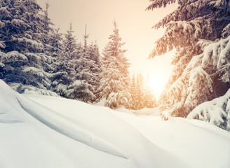 snow forest in winter
