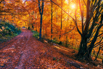 colored autumn forest