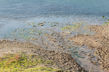 swamp shore