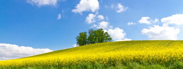 Grüner baum im gelben Rapsfeld