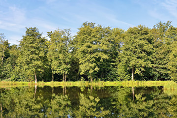 Forest trees reflecting in river water in sunny summer day