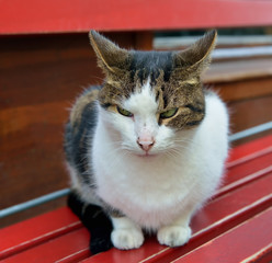 Angry street cat showing his emotions with ears