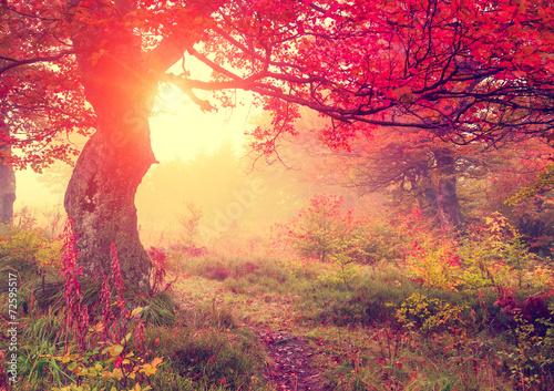 Keuken foto achterwand Bossen autumn leaf in forest