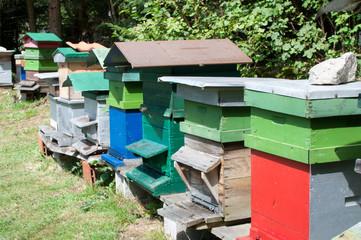 Plusieurs ruches d'abeilles formant un rucher