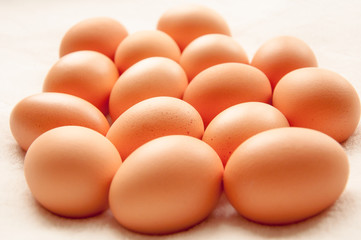 Brown hens Eggs in a group