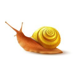 Snail realistic isolated