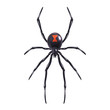 Realistic spider isolated - 72598921
