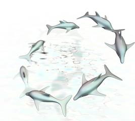Dolfijnen schoonspringen