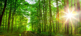 forest trees. - 72600991