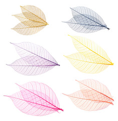 Collection of multi-colored leaves for design. Isolated.