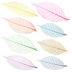 Collection of multi-colored leaves for design.