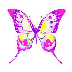 butterfly171