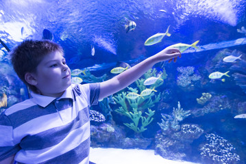 The boy in Oceanarium considers fish