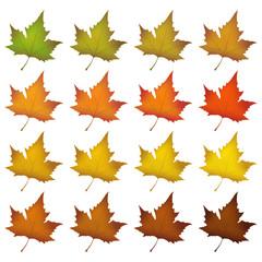 Blätter, Herbstblätter, Herbst, Symbol, herbstlich, Farben