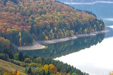 Mirroring forest