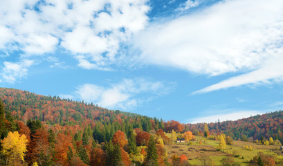 Beautiful landscape with colorful autumn trees in mountains Carp