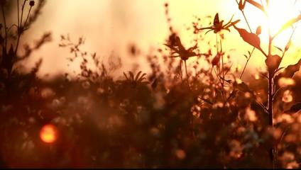 Трава в контровом свете