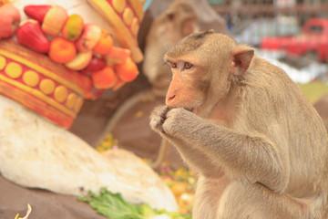 monkey and fruits