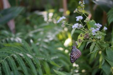 葉に止まる蝶