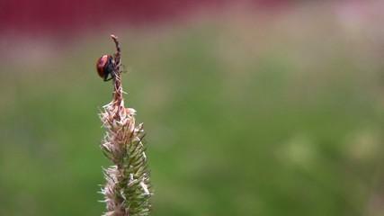 A ladybug on a straw