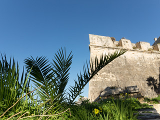 Leaves of a palm tree and fortification wall of Valletta, Malta