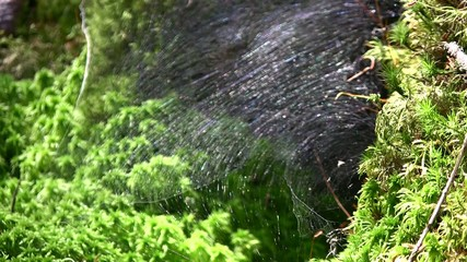 A spider crawl from a web