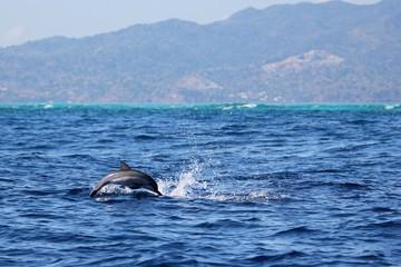 bébé dauphin long bec
