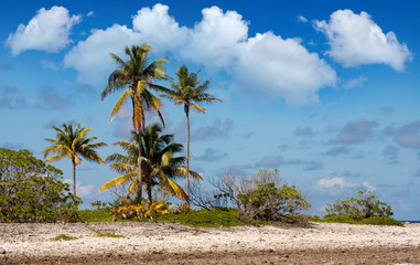 Tropical island. Coral fields and palm trees...