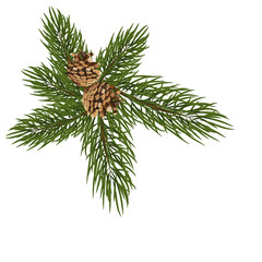 isolated green fir branch with two cones on a white background