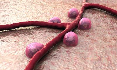 blood vessel, Beta cells