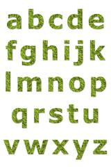 lower letter of green lichen