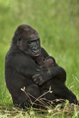 Gorilla moeder met tweeling.