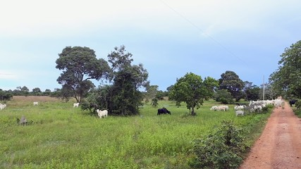 The farm in Pantanal, Brazil