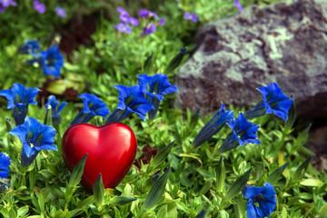 Postkarte mit rotem Herz in blauem Enzian