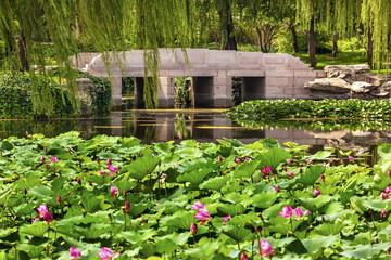Lotus Garden Reflection Bridge Summer Palace Beijing China
