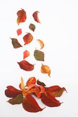 renkli yapraklar
