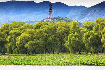 Yue Feng Pagoda Lotus Garden Summer Palace Beijing China