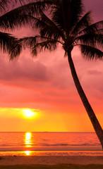 Palm Paradise Coconut Horizon