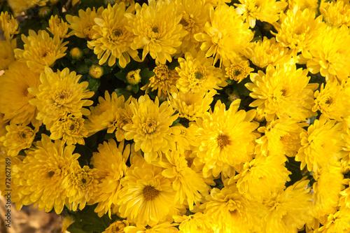 Foto op Canvas Madeliefjes Mums Bouquet
