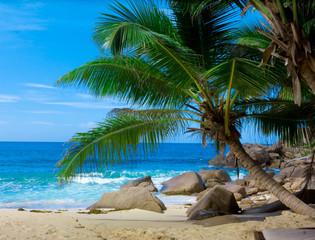 Exotic Frame Paradise